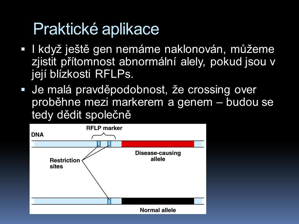 Praktické aplikace I když ještě gen nemáme naklonován, můžeme zjistit přítomnost abnormální alely, pokud jsou v její blízkosti RFLPs.