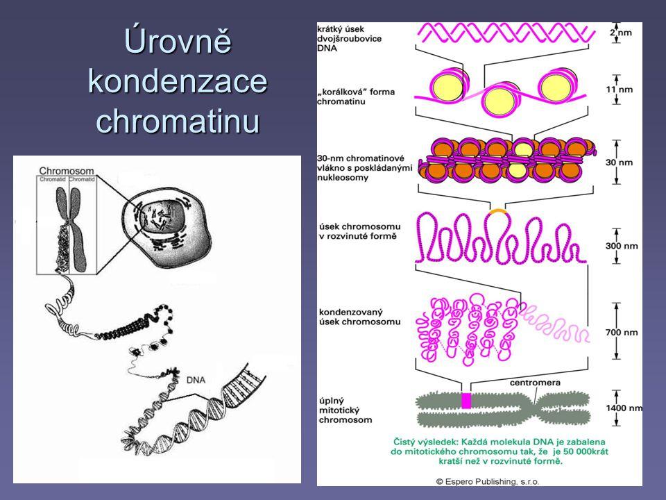 Úrovně kondenzace chromatinu