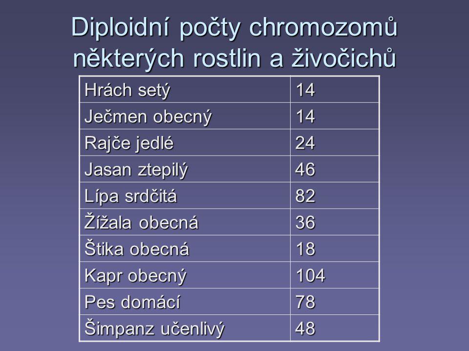 Diploidní počty chromozomů některých rostlin a živočichů