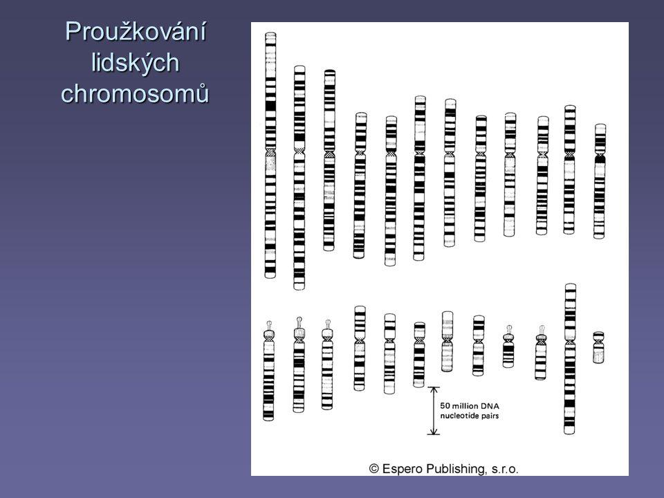 Proužkování lidských chromosomů