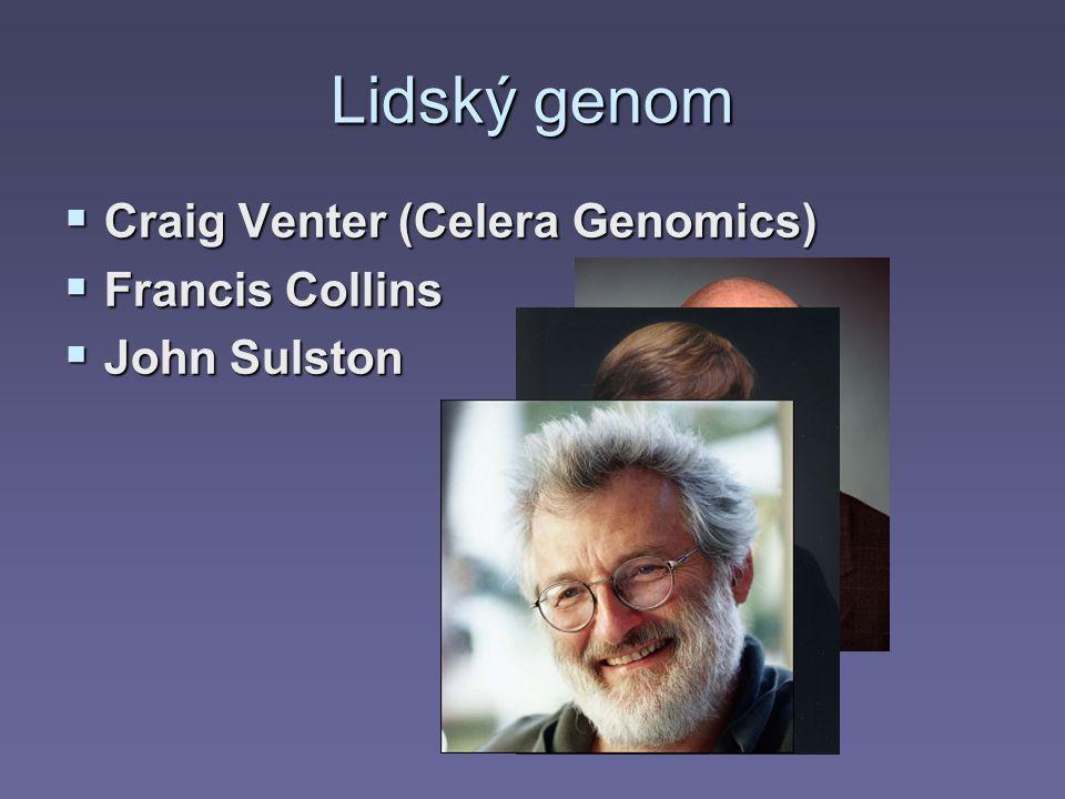 Lidský genom Craig Venter (Celera Genomics) Francis Collins