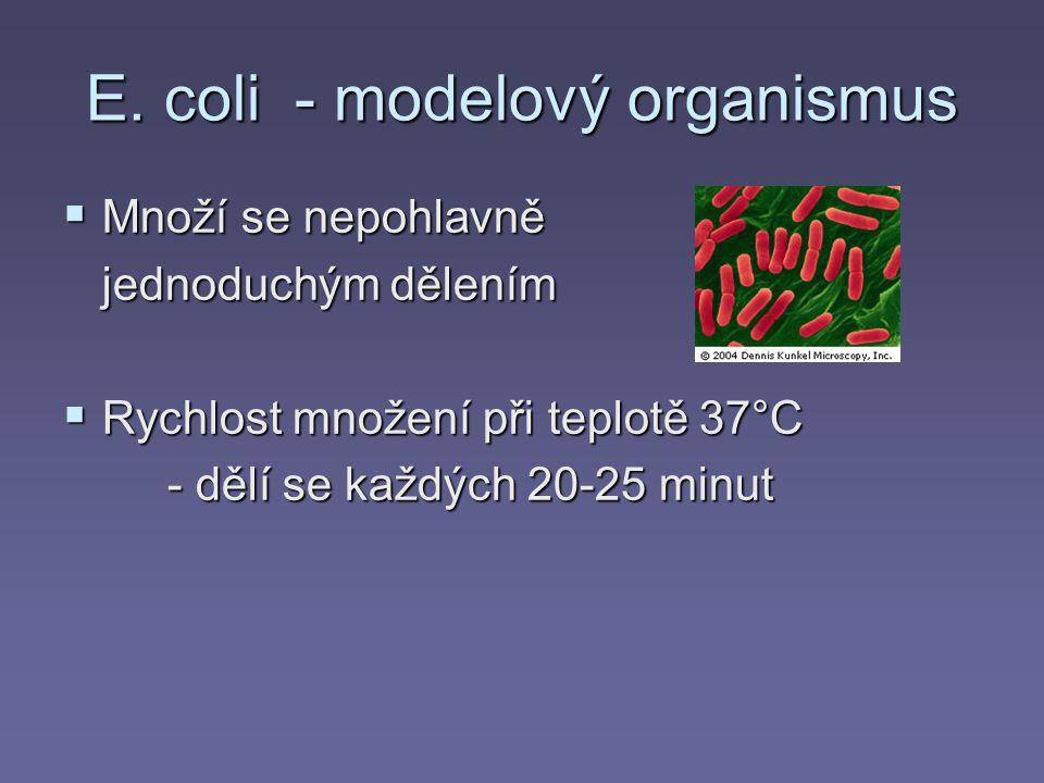 E. coli - modelový organismus