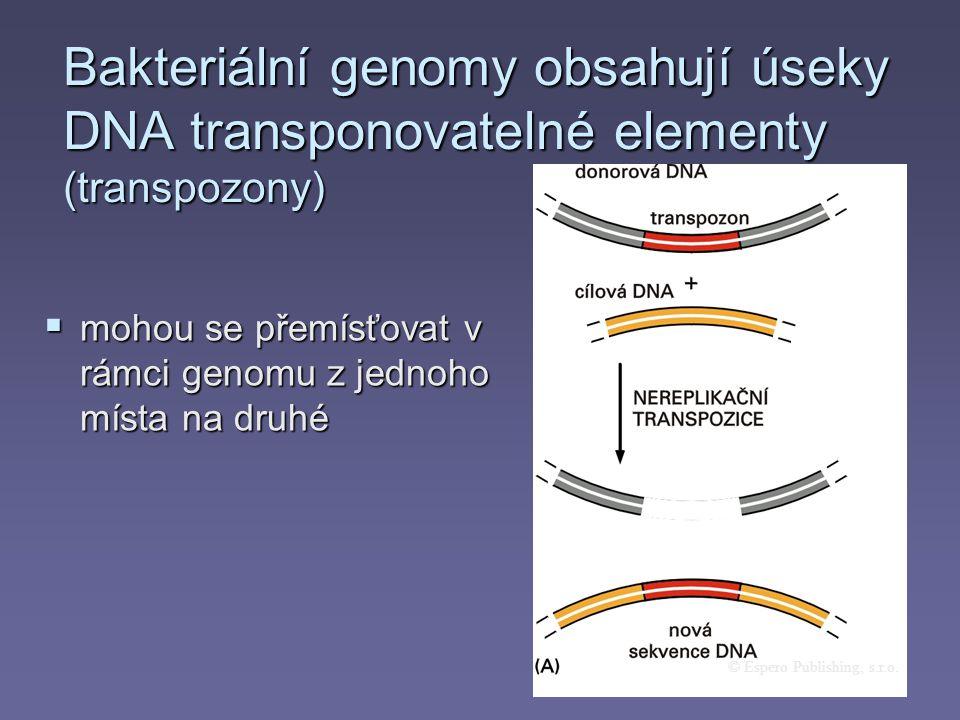 Bakteriální genomy obsahují úseky DNA transponovatelné elementy (transpozony)