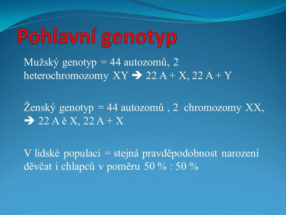 Pohlavní genotyp Mužský genotyp = 44 autozomů, 2 heterochromozomy XY  22 A + X, 22 A + Y.
