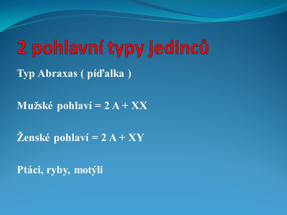 2 pohlavní typy jedinců Typ Abraxas ( píďalka )