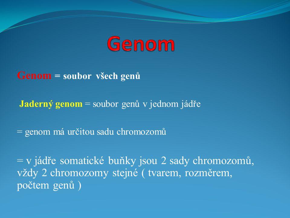 Genom Genom = soubor všech genů