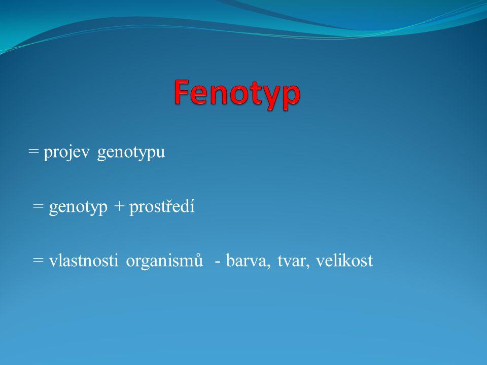 Fenotyp = projev genotypu = genotyp + prostředí
