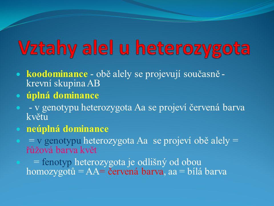 Vztahy alel u heterozygota