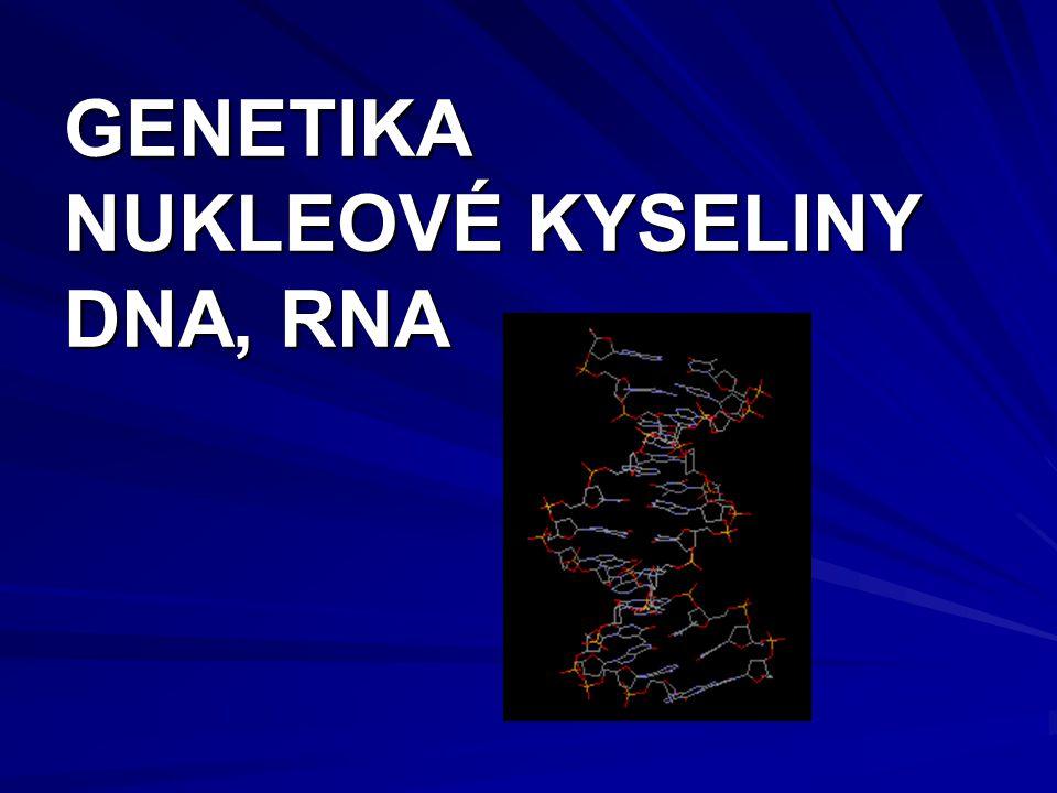 GENETIKA NUKLEOVÉ KYSELINY DNA, RNA