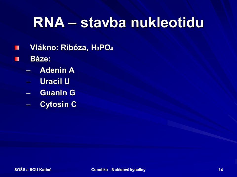 RNA – stavba nukleotidu