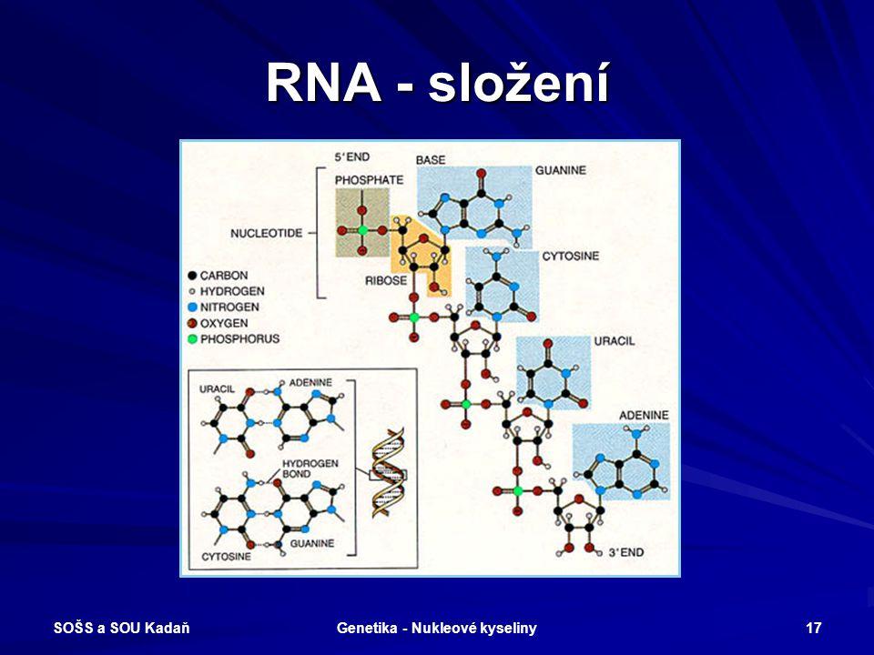 Genetika - Nukleové kyseliny