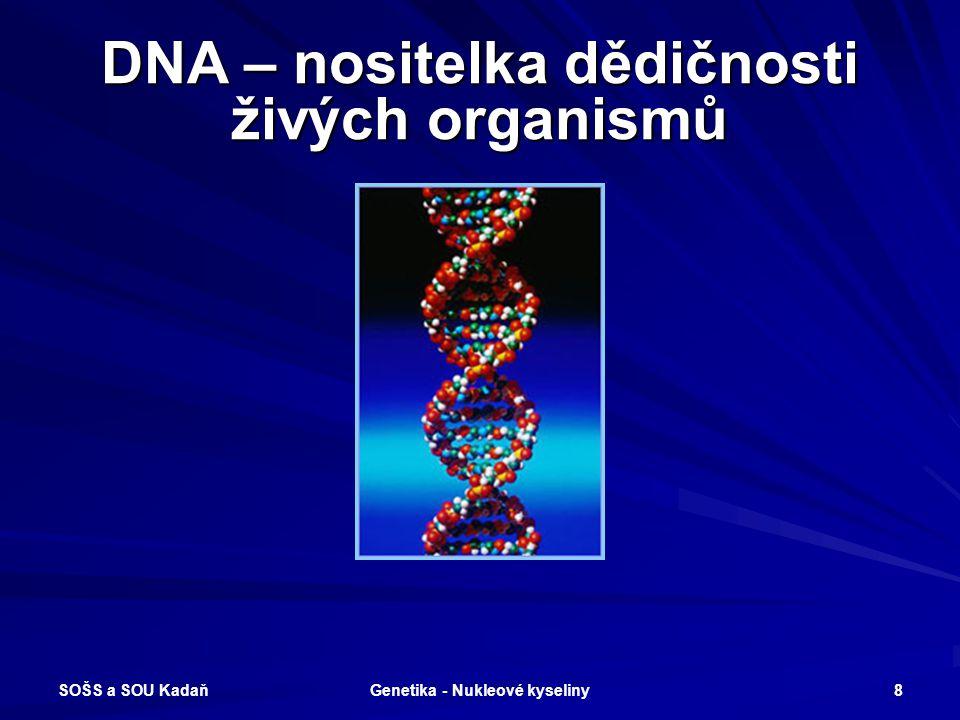 DNA – nositelka dědičnosti živých organismů