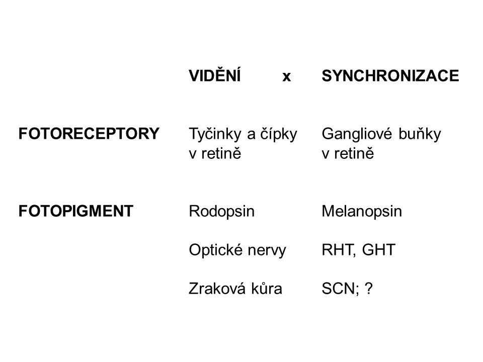 VIDĚNÍ x SYNCHRONIZACE