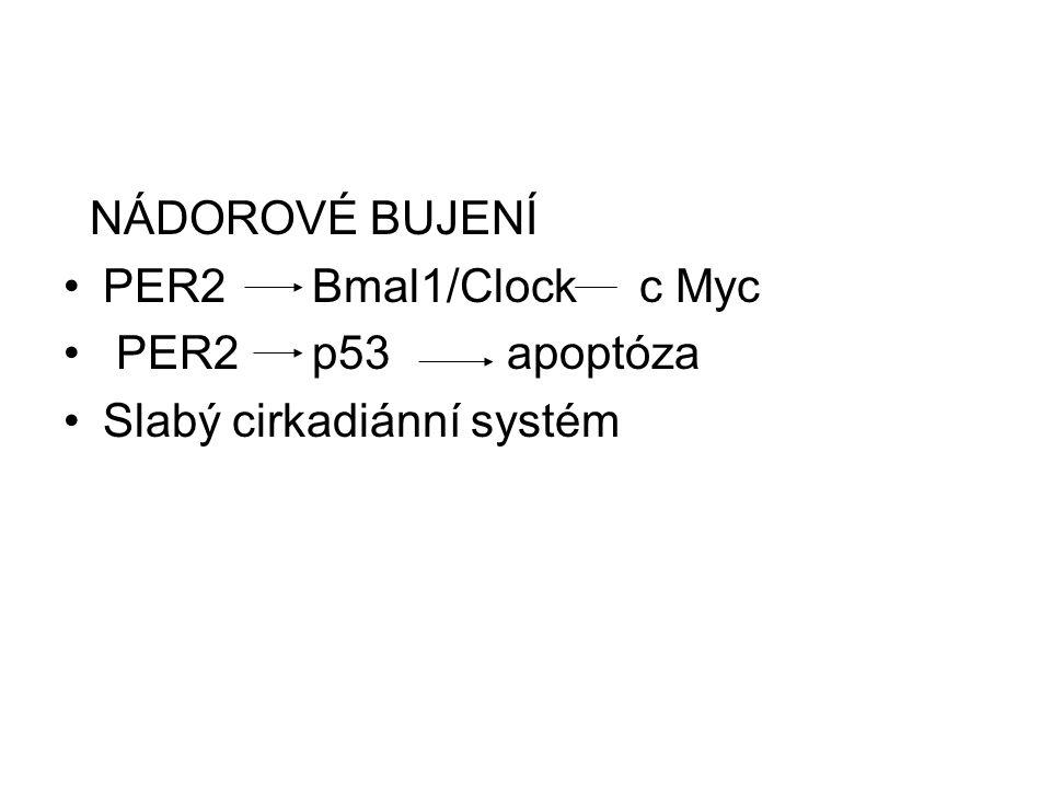 NÁDOROVÉ BUJENÍ PER2 Bmal1/Clock c Myc PER2 p53 apoptóza Slabý cirkadiánní systém