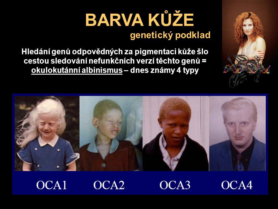 BARVA KŮŽE genetický podklad