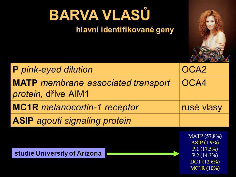 hlavní identifikované geny