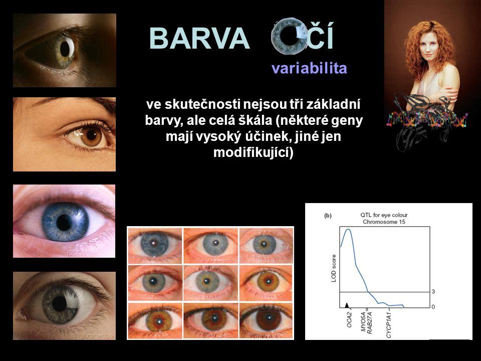 BARVA OČÍ variabilita.