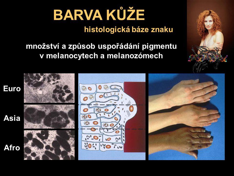 BARVA KŮŽE histologická báze znaku