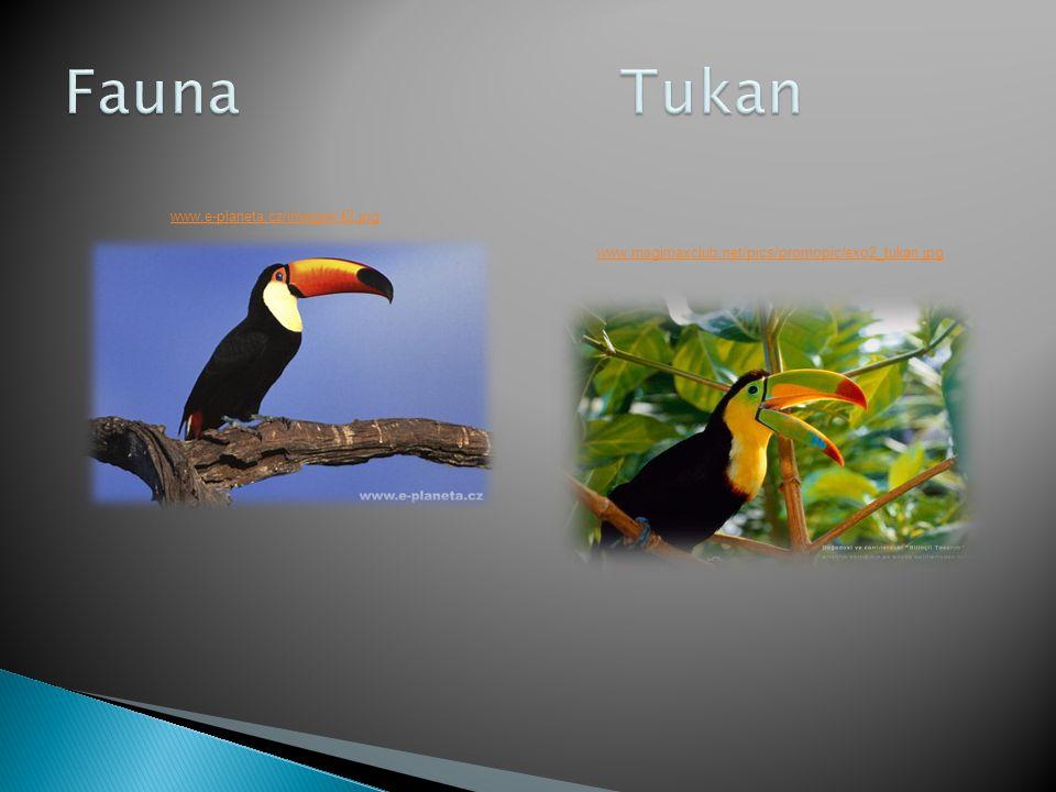 Fauna Tukan www.e-planeta.cz/images/42.jpg