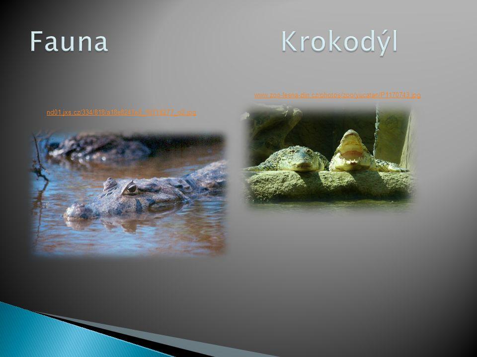 Fauna Krokodýl www.zoo-lesna-zlin.cz/photos/zoo/yucatan/P1170743.jpg