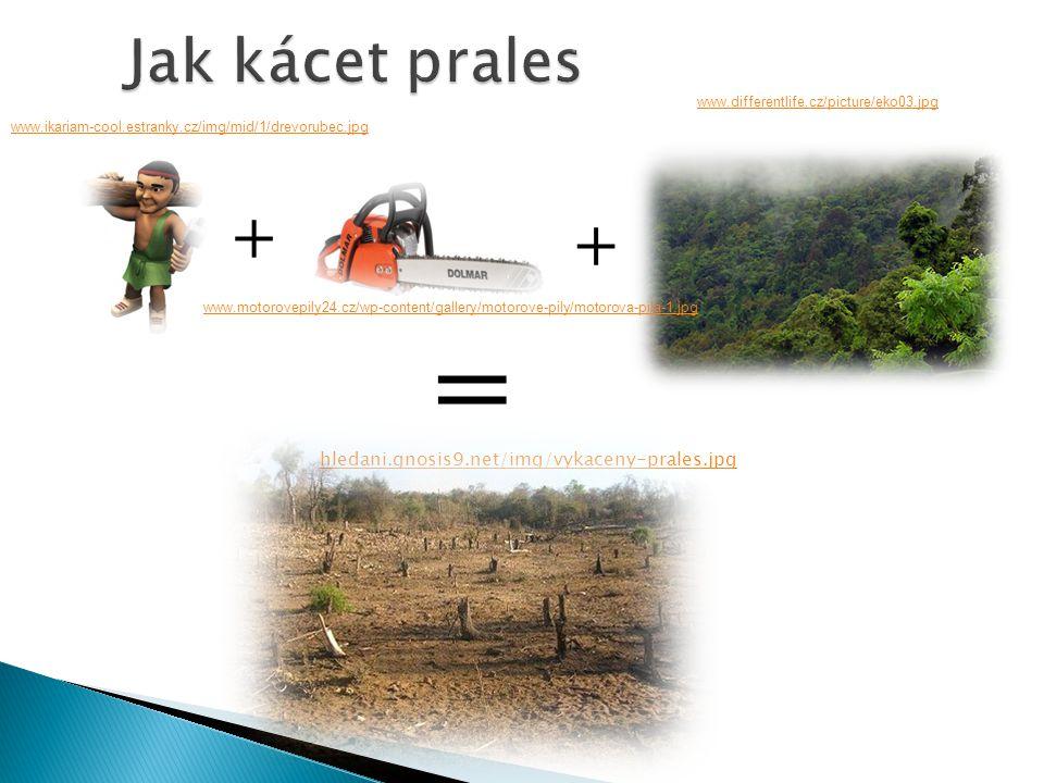 = + + Jak kácet prales hledani.gnosis9.net/img/vykaceny-prales.jpg