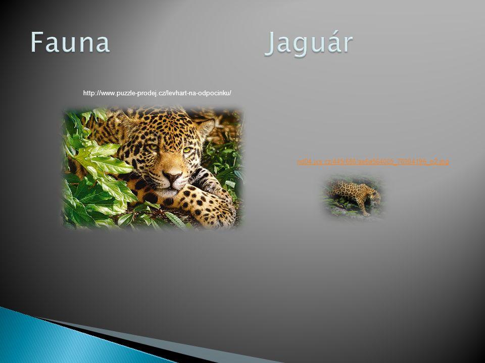 Fauna Jaguár http://www.puzzle-prodej.cz/levhart-na-odpocinku/