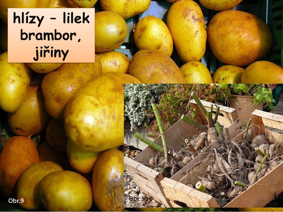 hlízy – lilek brambor, jiřiny