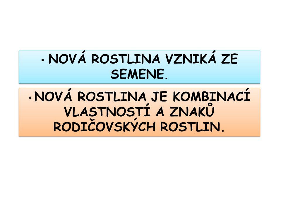 NOVÁ ROSTLINA VZNIKÁ ZE SEMENE.