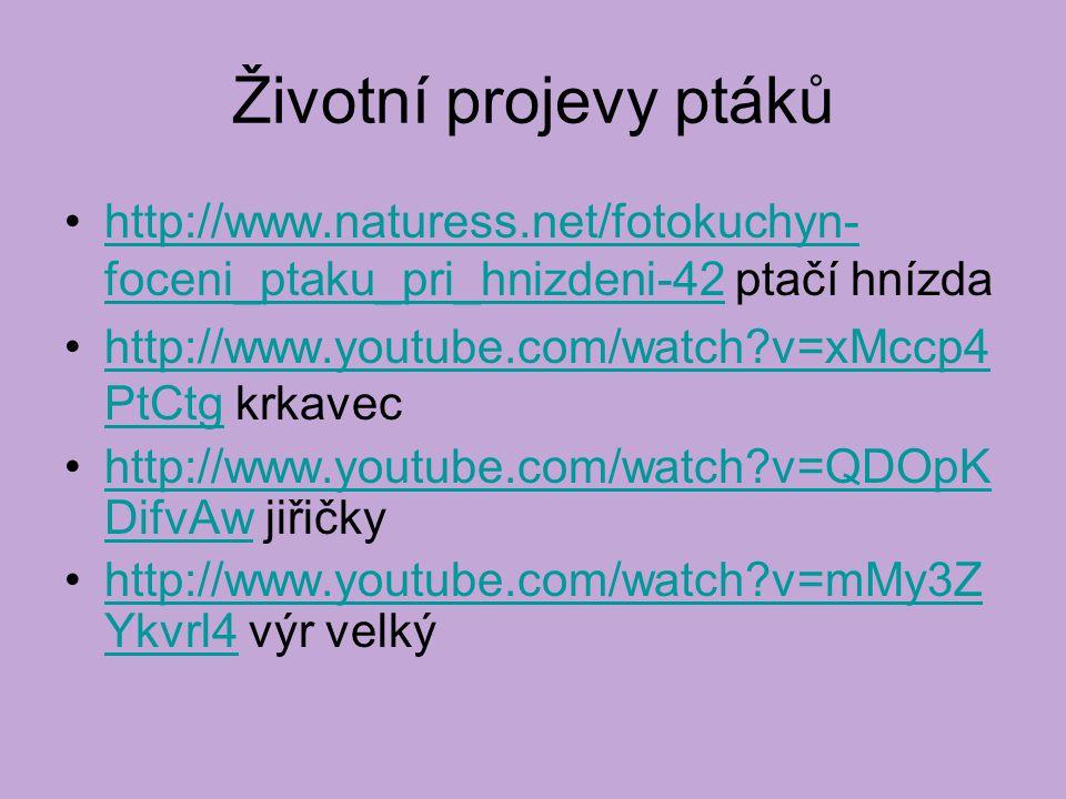 Životní projevy ptáků http://www.naturess.net/fotokuchyn-foceni_ptaku_pri_hnizdeni-42 ptačí hnízda.