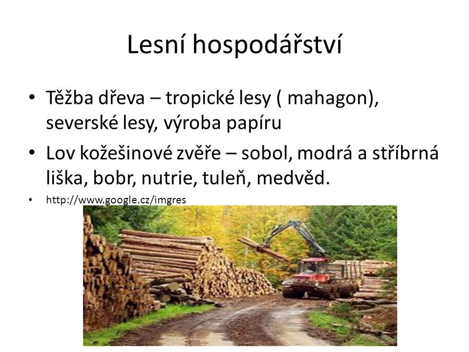 Lesní hospodářství Těžba dřeva – tropické lesy ( mahagon), severské lesy, výroba papíru.