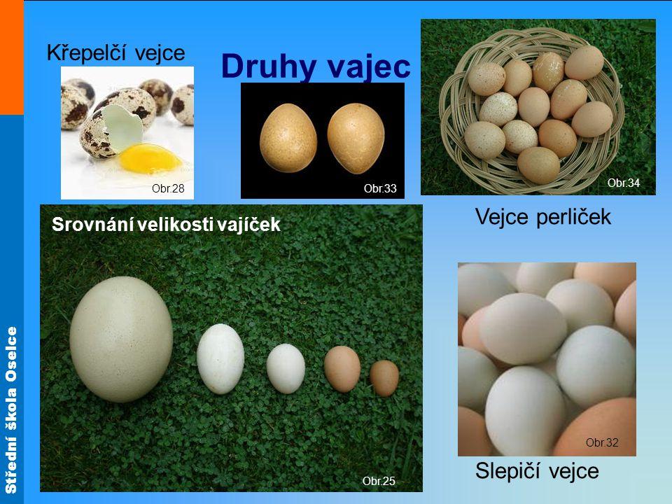 Druhy vajec Křepelčí vejce Vejce perliček Slepičí vejce