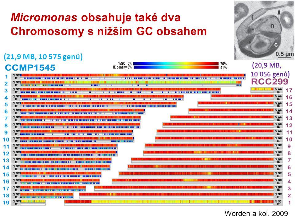Micromonas obsahuje také dva Chromosomy s nižším GC obsahem