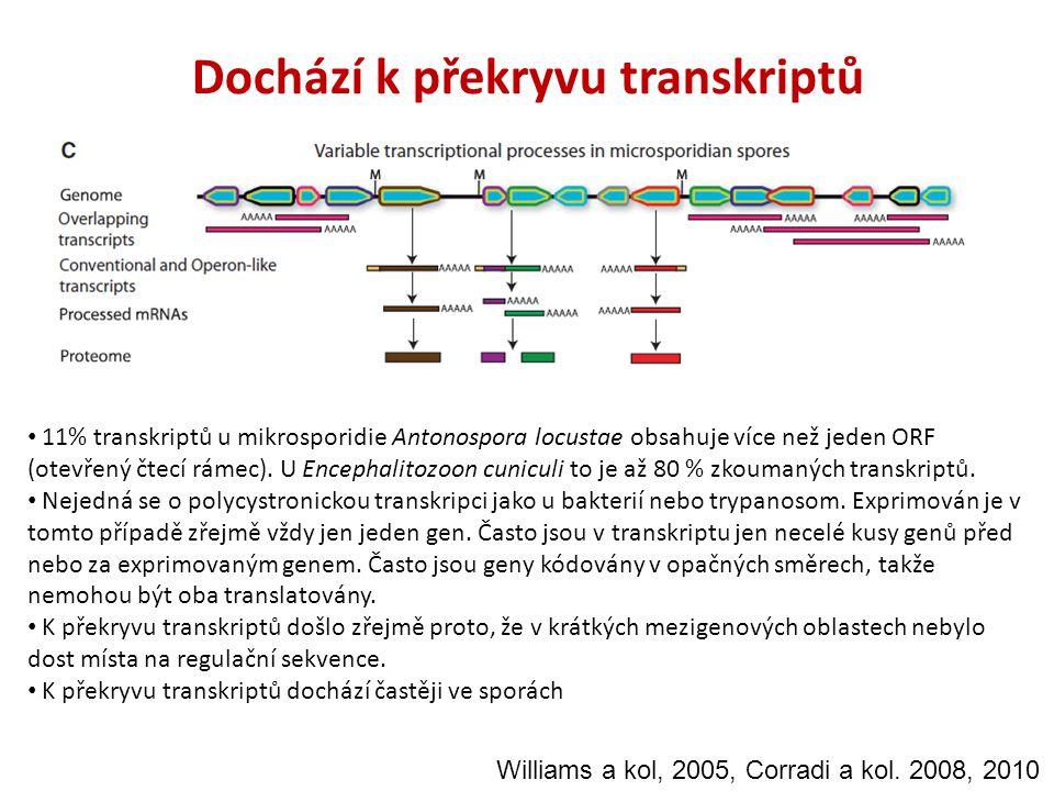 Dochází k překryvu transkriptů