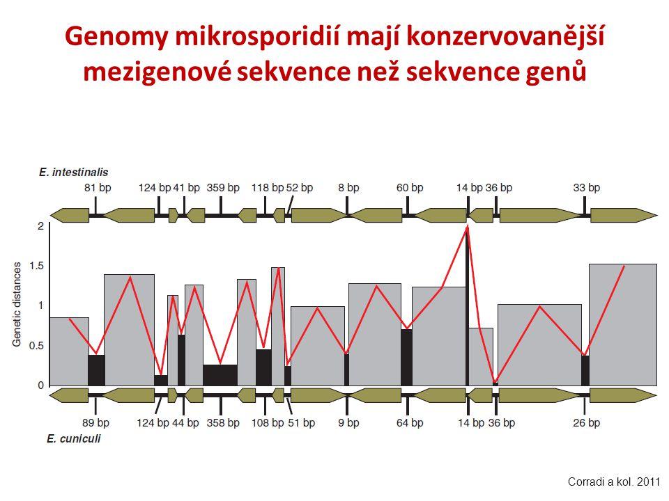 Genomy mikrosporidií mají konzervovanější mezigenové sekvence než sekvence genů