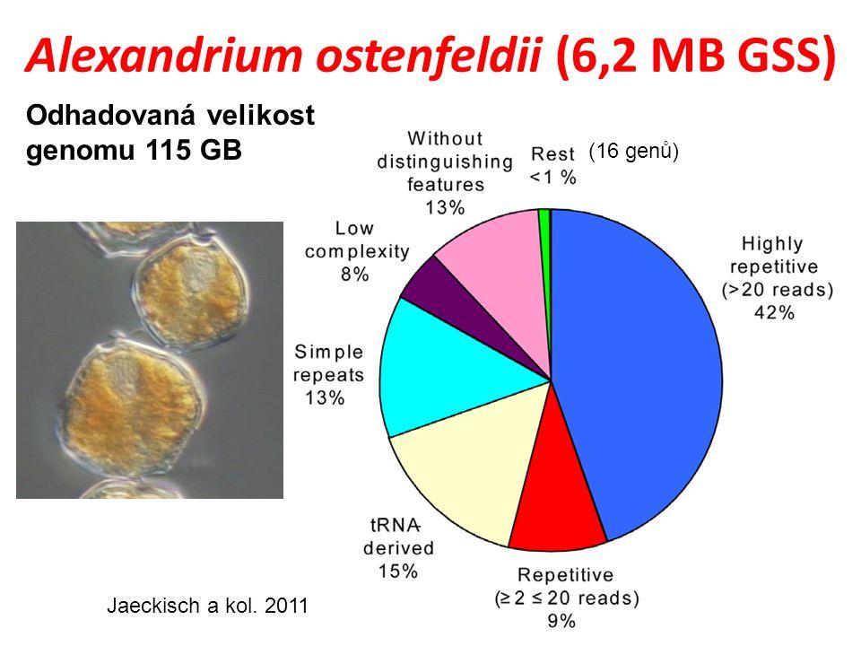Alexandrium ostenfeldii (6,2 MB GSS)