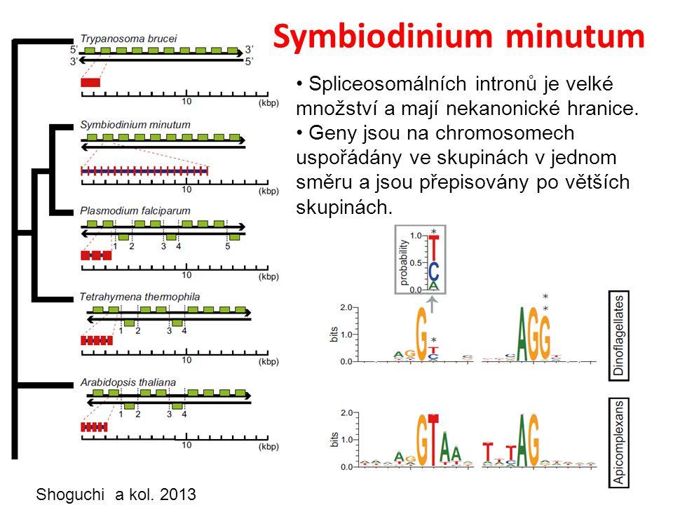 Symbiodinium minutum Spliceosomálních intronů je velké množství a mají nekanonické hranice.