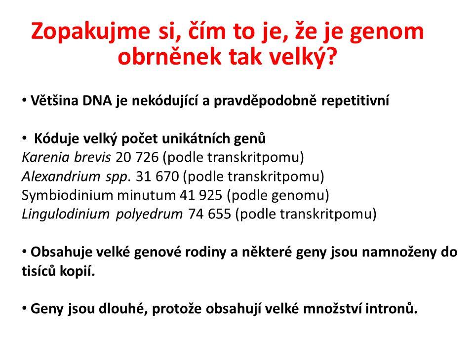 Zopakujme si, čím to je, že je genom obrněnek tak velký