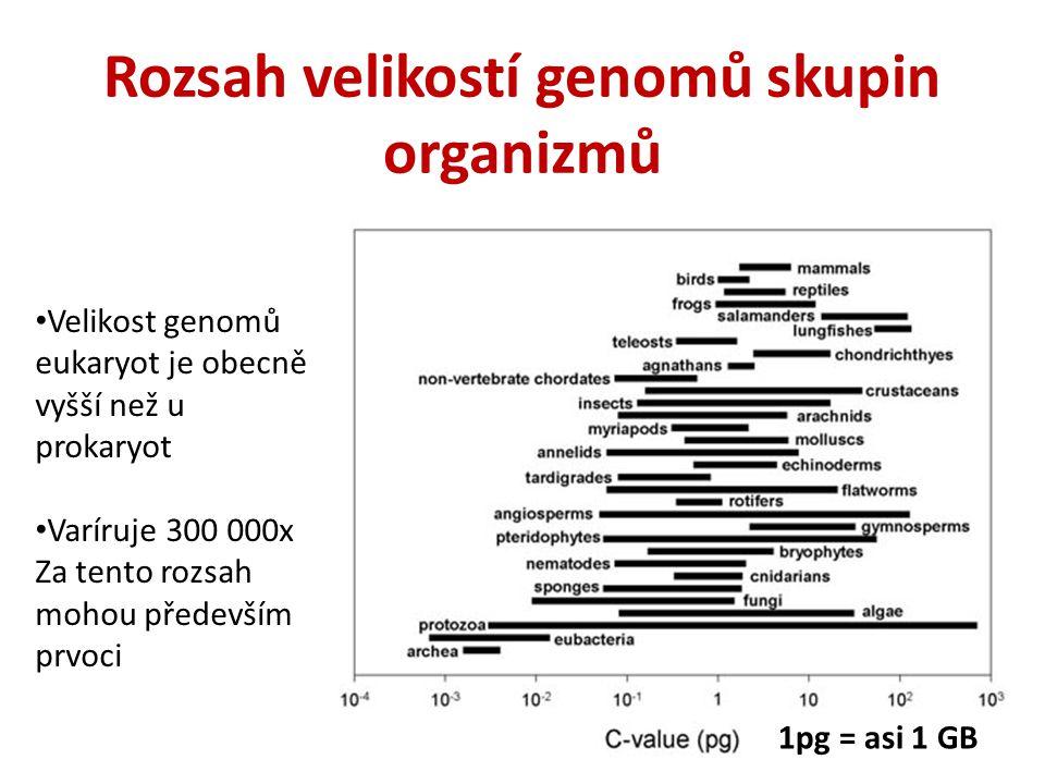 Rozsah velikostí genomů skupin organizmů