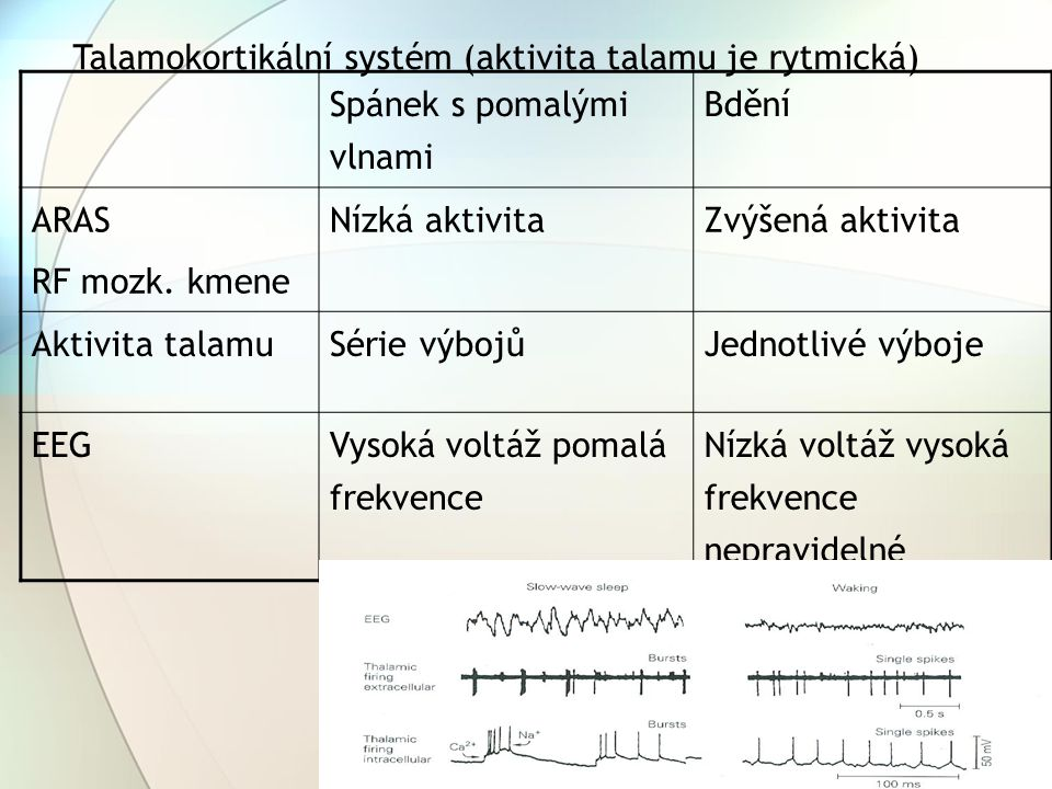 Talamokortikální systém (aktivita talamu je rytmická)