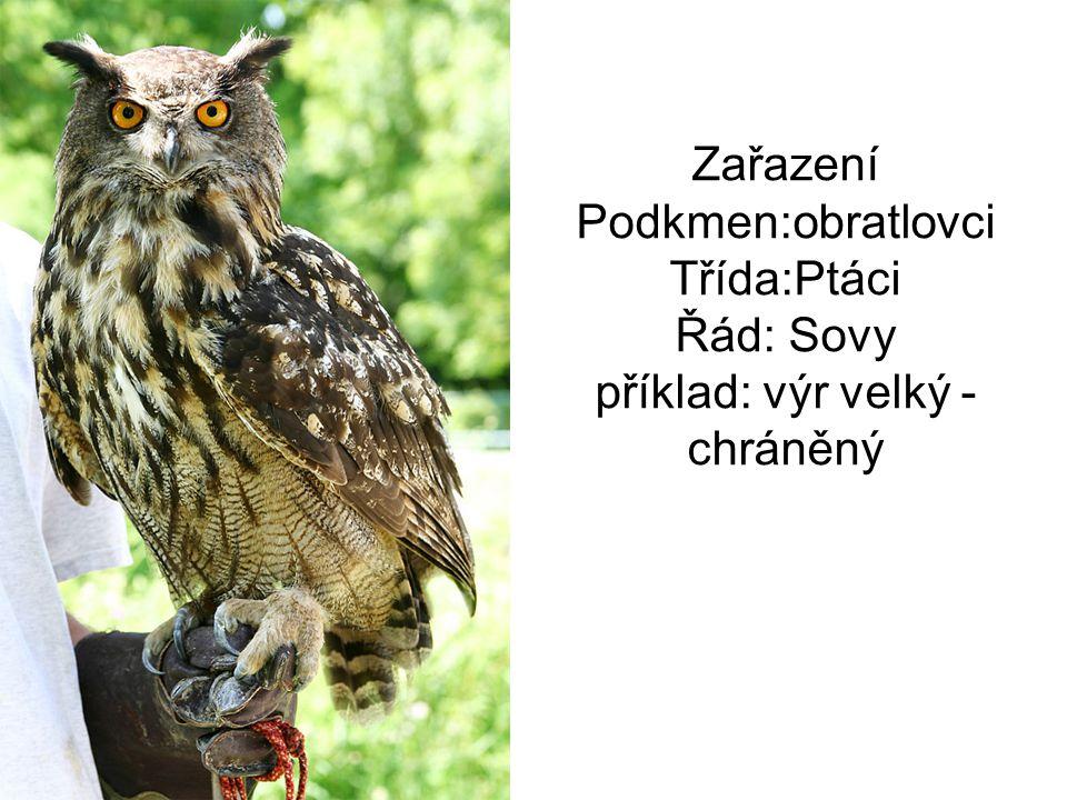 Zařazení Podkmen:obratlovci Třída:Ptáci Řád: Sovy příklad: výr velký - chráněný