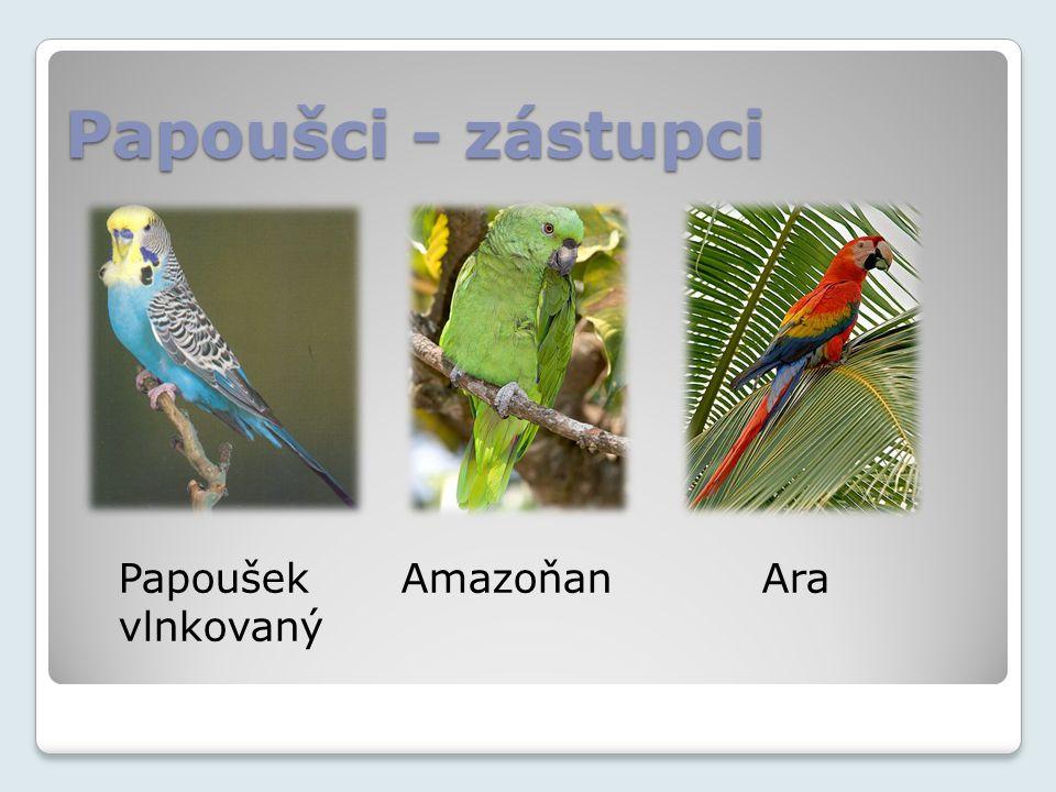 Papoušci - zástupci Papoušek Amazoňan Ara vlnkovaný