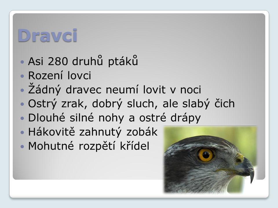 Dravci Asi 280 druhů ptáků Rození lovci