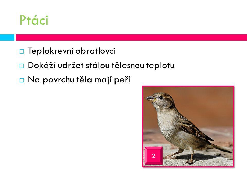 Ptáci Teplokrevní obratlovci Dokáží udržet stálou tělesnou teplotu