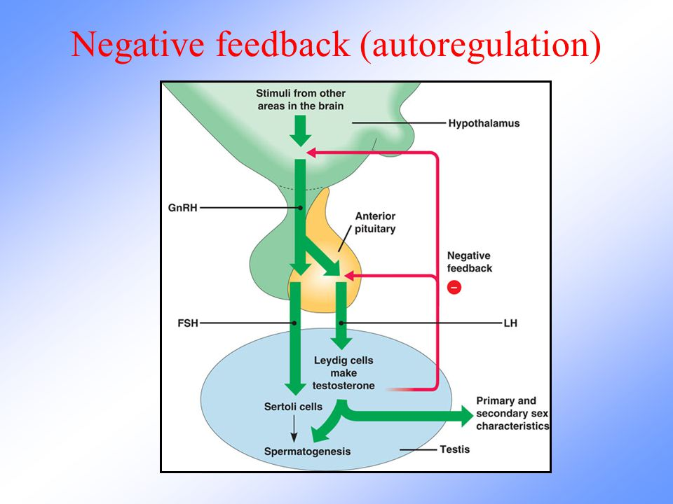Negative feedback (autoregulation)