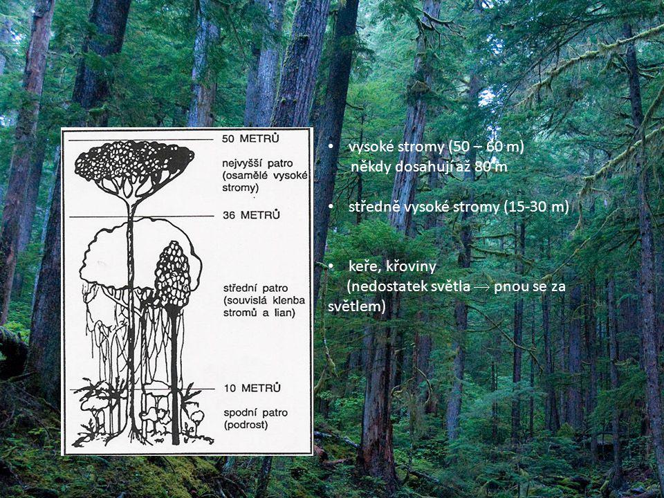 vysoké stromy (50 – 60 m) někdy dosahují až 80 m. středně vysoké stromy (15-30 m) keře, křoviny.