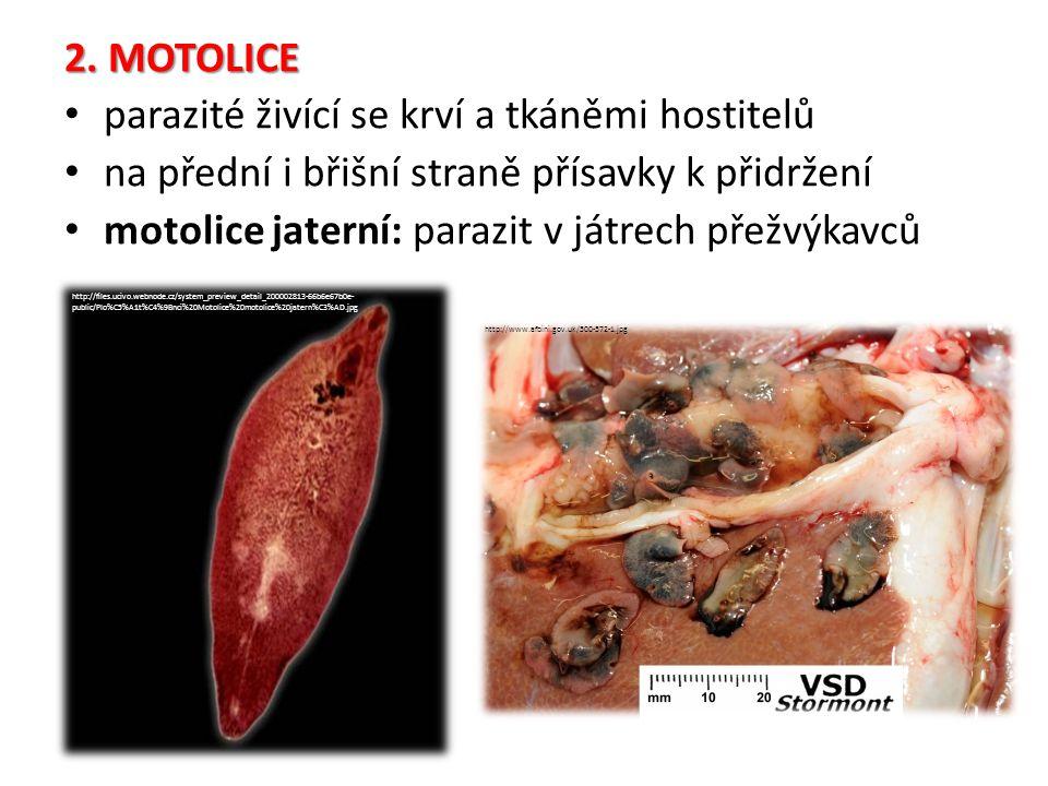 parazité živící se krví a tkáněmi hostitelů