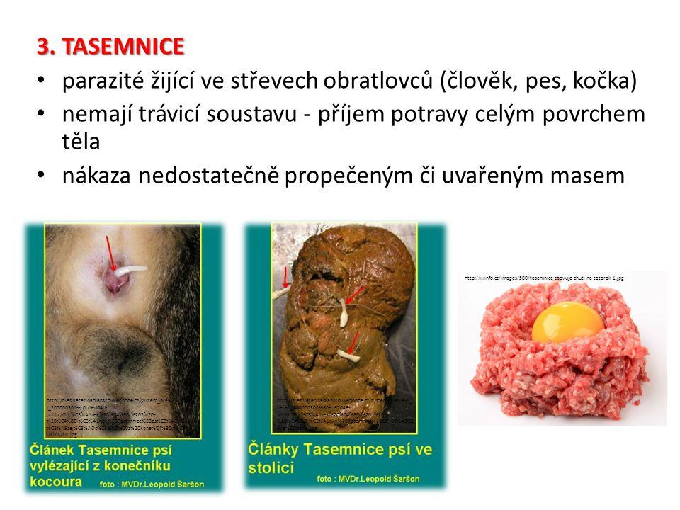 parazité žijící ve střevech obratlovců (člověk, pes, kočka)