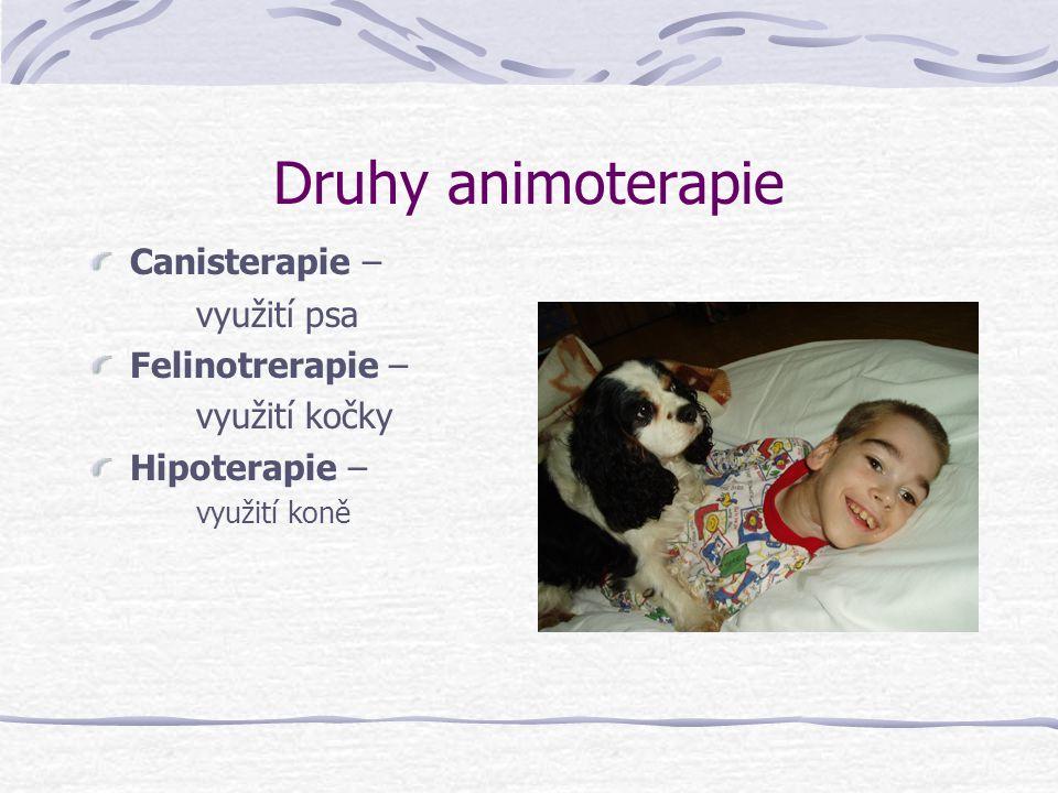 Druhy animoterapie Canisterapie – využití psa Felinotrerapie –