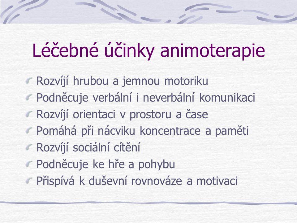 Léčebné účinky animoterapie