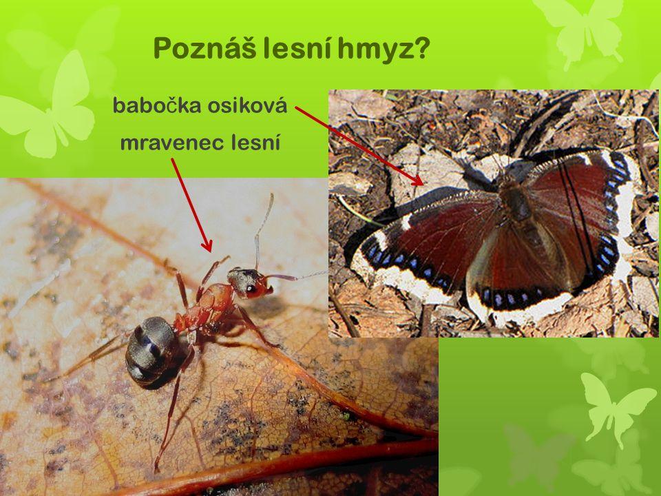 babočka osiková mravenec lesní